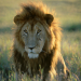 Bilder zur Sendung: Wilde Tierwelt - Überraschungsangriffe