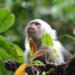 Bilder zur Sendung: Kolumbiens wilde Sch�nheit