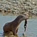 Bilder zur Sendung: Wildnis am Strom - Nationalpark Donau-Auen