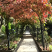 Venedigs Gärten und die Habsburger - Auf Sisis Spuren