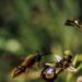 Kluge Pflanzen - Wie die wilden Tiere