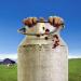 Milchgeld. Ein Kluftingerkrimi