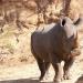 Tödliches Afrika - Killer der Savanne
