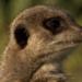 Bilder zur Sendung: Das Jahr der Wildnis