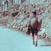 Kindheit im Dritten Reich
