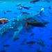 Geheimnisse der Ozeane