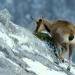 Die wilde Bergwelt Kantabriens