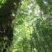 Urwald der Alpen - Wildnisgebiet Dürrenstein