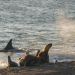 Tierische Freibeuter der Meere