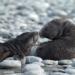 Kreuzfahrt in die Antarktis - Expedition zum wei�en Kontinent