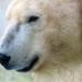 Bilder zur Sendung: Nashorn, Zebra & Co: Ein melancholischer Eisb�r