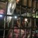 Hinter Gittern - South Cotabato Jail auf den Philippinen