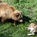 Animal Fight Club - Gefährliche Begegnungen