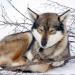Mit Huskies über den Arctic Trail