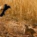 Unbekanntes Afrika: Kalahari
