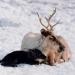 Schneebabys - Der erste Winter
