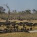 Tödliches Afrika - Tierische Kämpfer
