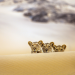 Die Wüstenlöwen der Namib