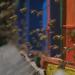 Die Bienenflüsterer