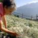Bilder zur Sendung: Kräuterwelten der Alpen