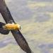 Die Wildnis Afrikas: Vier Jahreszeiten