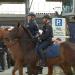 Einsatz für die Pferdepolizei