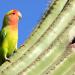 Planet der Papageien
