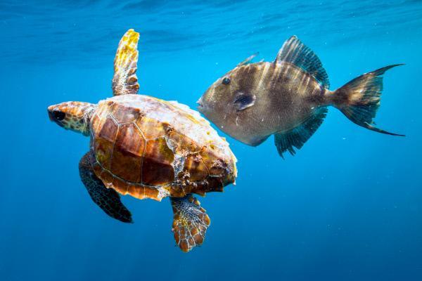 Bild 1 von 6: Unterwasserschildkröte