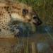 Tödliches Afrika - Tierische Beutezüge