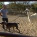 Bilder zur Sendung: Notruf Hund - Einsatz für Cesar