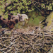 Wildes Deutschland - Der Spreewald
