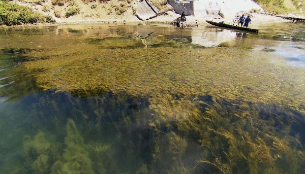 Bild 1 von 5: Der Atitlan-See mit Giftpflanzen ist umgekippt.