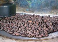 Belize - Der Kakao-Pflanzer