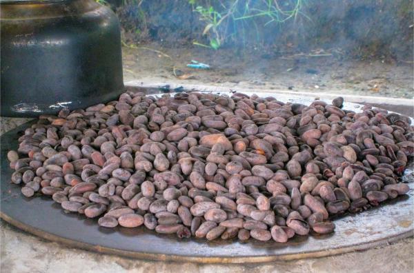 Bild 1 von 5: Eladio Pop setzt auf eine nachhaltige Produktionsweise von Kakao. Seine Bohnen sind nicht mit chemischen Düngemittel behandelt, selbst wenn dies in einem rivalisierenden, kapitalistischen Wirtschaftssystem lukrativer scheint.