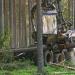 Rettet die Wälder!