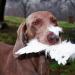 Jagdkumpane - Wie der Hund auf den Mensch kam