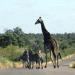 Zu Gast im Süden Afrikas