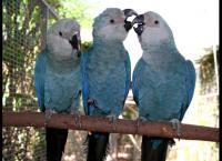 Papageien, Palmen & Co