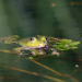 Im Reich des Froschkönigs