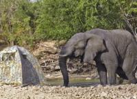 Serengeti - Das Abenteuer