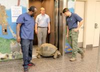 Bronx Zoo - Tierpark der Superlative