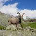 Bilder zur Sendung: Der Alpenkönig kehrt zurück