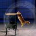 Science of Stupid - Wissenschaft der Missgeschicke: Katzen-Special