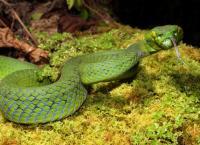 Tödliche Schlangen - Expedition China