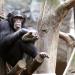 Das Geheimnis der Affen