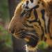 Bilder zur Sendung: Wild Frank - Von Kathmandu bis Kalkutta