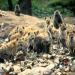 Bilder zur Sendung: Die Hyänen vom Mara Fluss