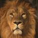Fight Club der Tiere - Der Stärkere gewinnt