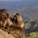 Bilder zur Sendung: Naturparadiese Afrikas