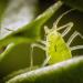 Winzige Wunder - Insekten